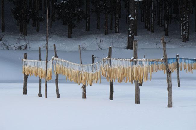 凍み大根の寒干し